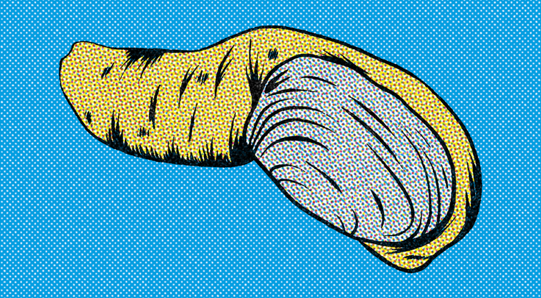 A graphic illustration of a geoduck