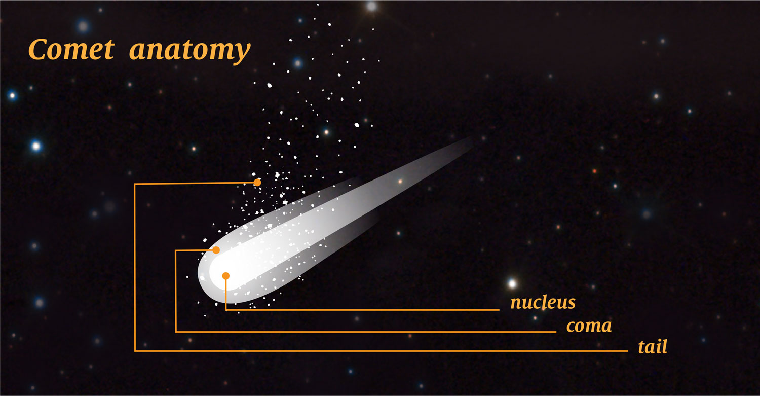 an illustration of a comet with it's nucleus, coma, and tail called out.