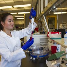 University of Arizona molecular and cellular biology undergraduate student Ayumi Pottenger handling a sample in the laboratory