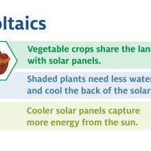 Agrivoltaics image with a vendiagram of water, an electrical pannel and a basket of tomatoes. Vegetable crops share the land with solar panels. Shaded plants need less water and cool the back of the solar panels. Cooler solar panels capture more energy fr
