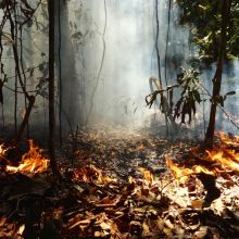 A forest fire burning through the Amazon rainforest