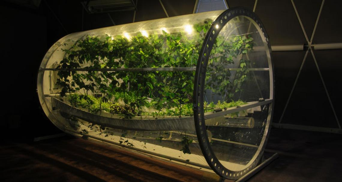 an image of Martian Lunar greenhouse with plants growing inside