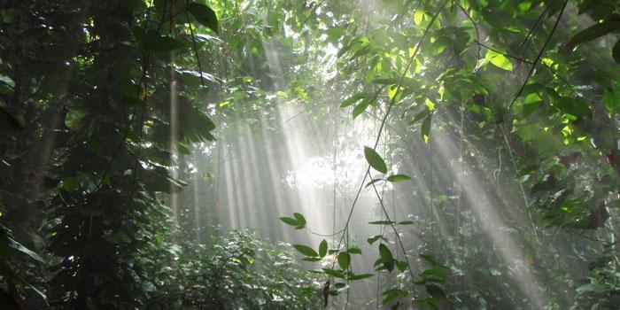 Biosphere2 Jungle