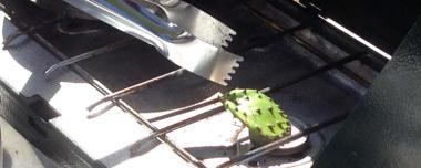 nopales, or a cactus pad being grilled