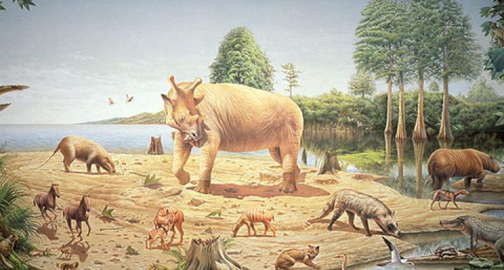 During the Eocene Epoch, alligator relatives swam in the swamps on Ellesmere Island and mammals climbed in the dawn redwood trees. (Image credit: Bob Hynes, Smithsonian Institution)