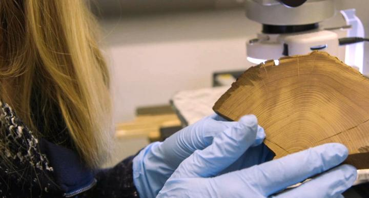 Researcher at the university of Arizona examining a wood block sample from the Tree Ring lab
