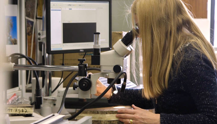 A female research is reviewing a wood block sample under a microscope in the University of Arizona Tree Ring lab